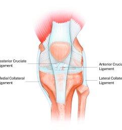 front of the knee diagram [ 1800 x 1200 Pixel ]