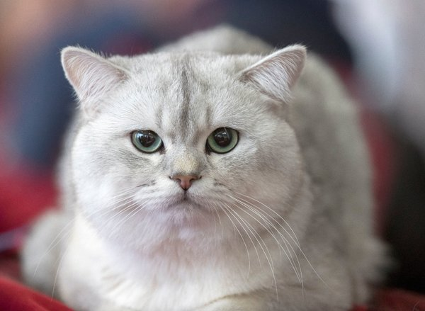 cat declawing ban is