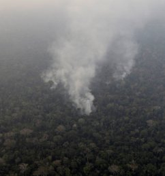 Amazon Rainforest Fires: Here's What's Really Happening - The New York Times [ 1365 x 2048 Pixel ]