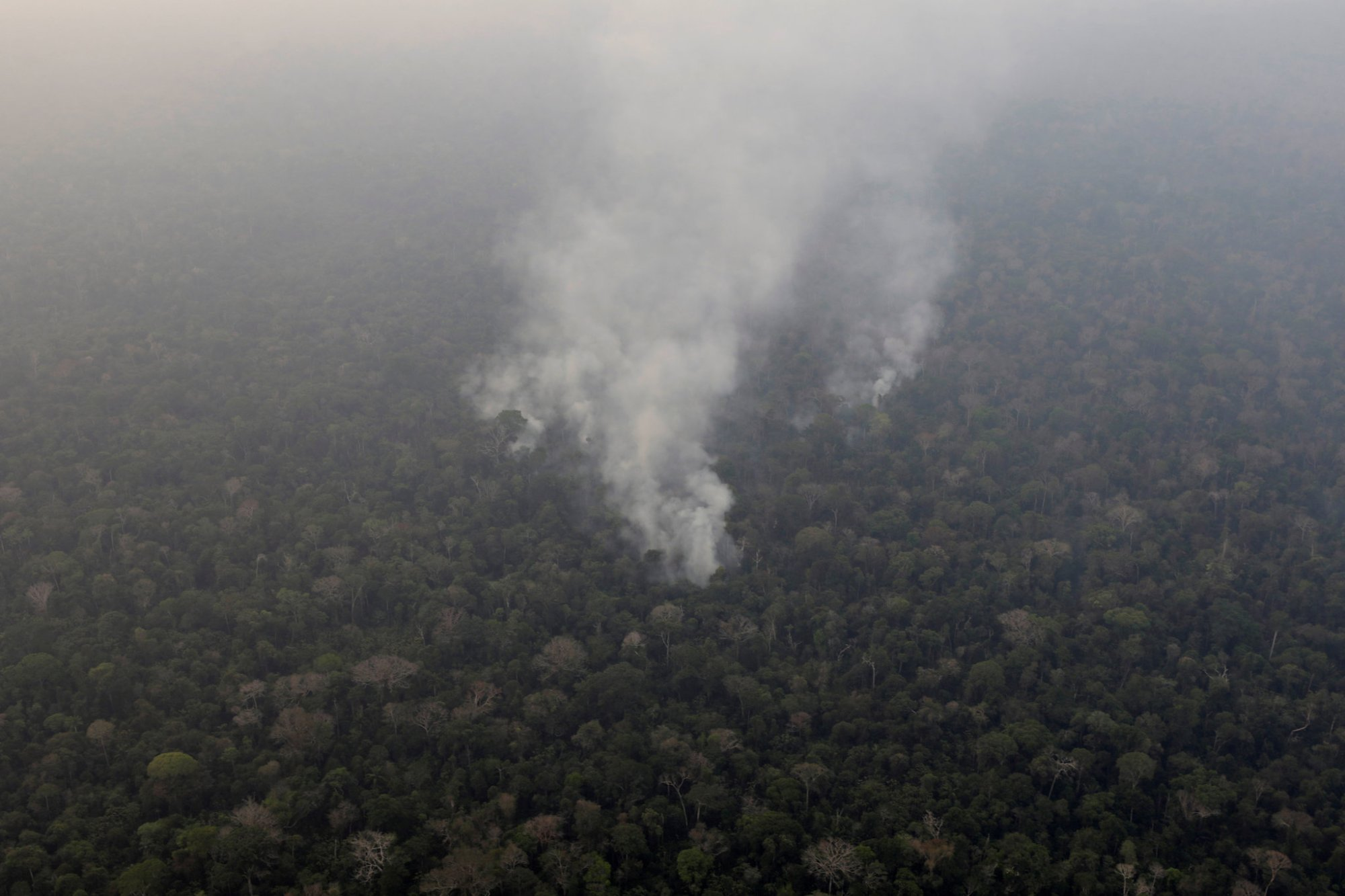 hight resolution of Amazon Rainforest Fires: Here's What's Really Happening - The New York Times