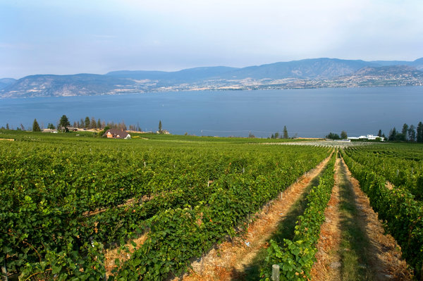 Many of the wines from British Columbia's Okanagan Valley are only sold in the region. Above, the CedarCreek Estate Winery in Kelowna.
