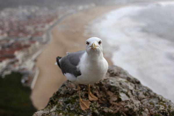 in defense of sea