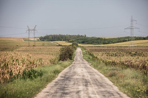 Fields near Lovasbereny, Fejer County.