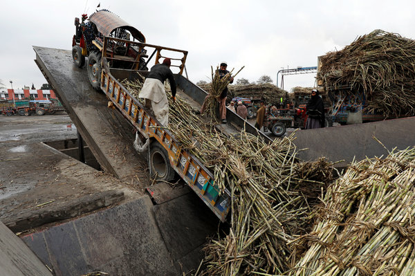 Workers unloading sugar cane at a mill in Peshawar, Pakistan.