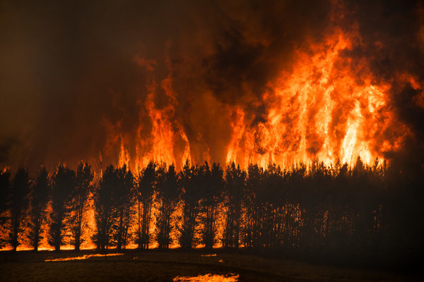 Climate change was at the top of the list of priorities at the World Economic Forum even before the bushfires broke out in Australia.