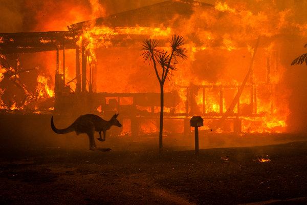 Image result for 2020 australian bushfires
