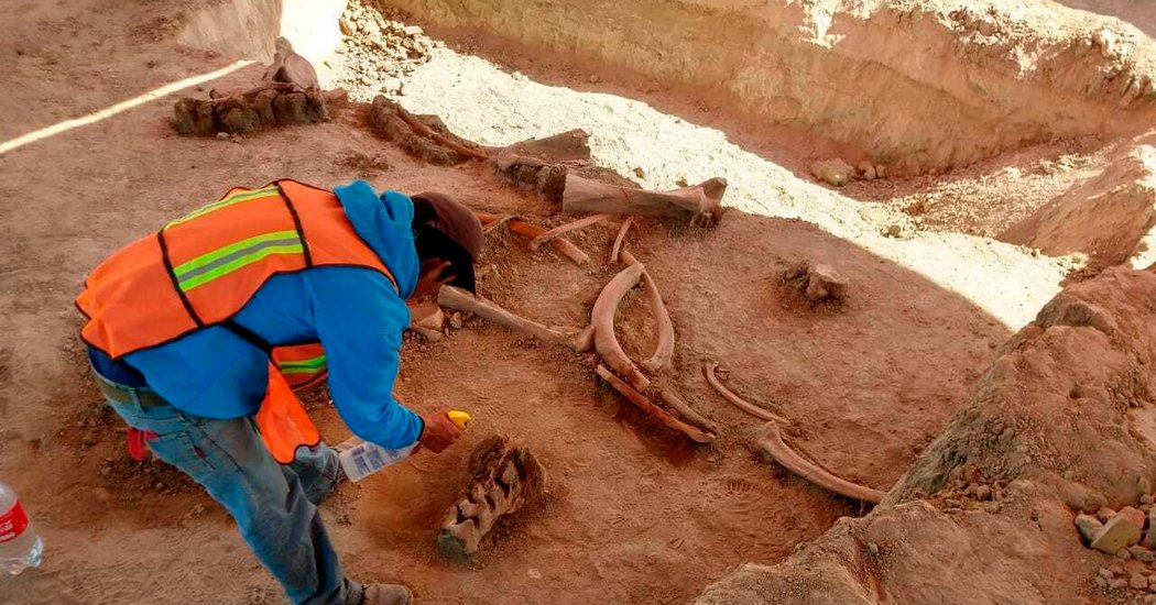 Remains of 60 Mammoths Found in Mexico