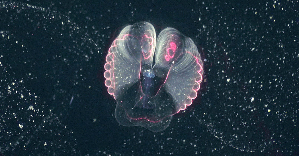 """Photo of The strangest creatures in the sea, now in """"amazing"""" details"""