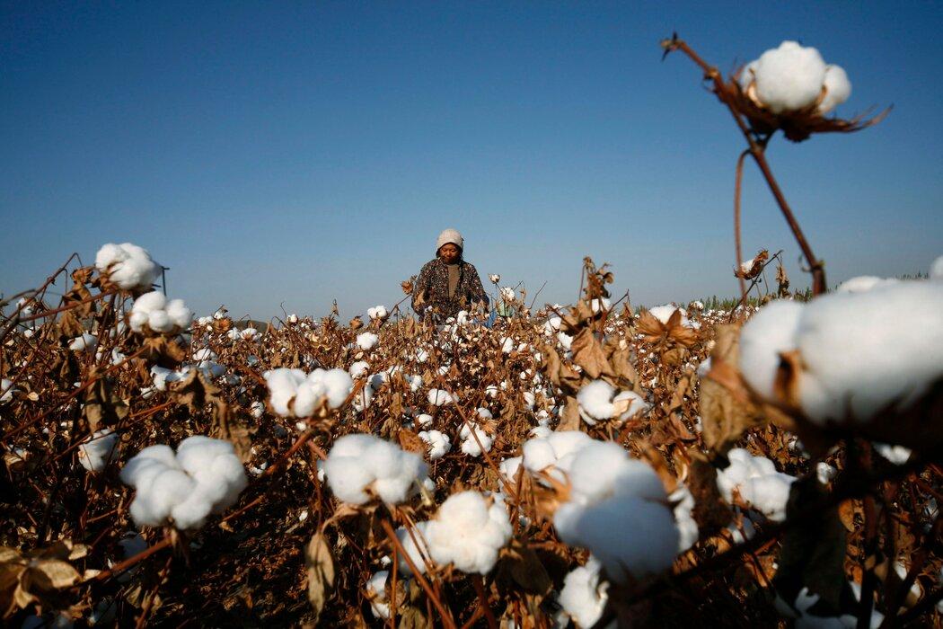 美國考慮對新疆棉制品實施禁令 - 紐約時報中文網