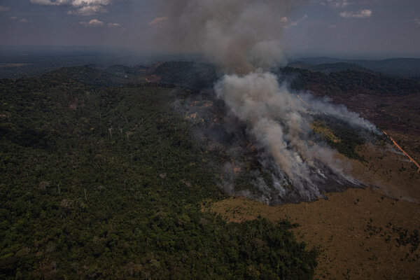 They have saved many acres of forest and we must help them to continue this. Brazil Amazon Deforestation Hits 12 Year High Under Bolsonaro The New York Times
