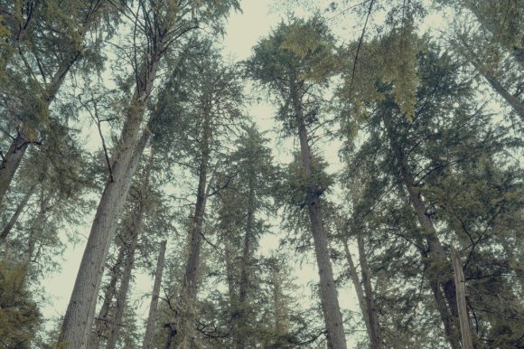 The Social Life of Forests
