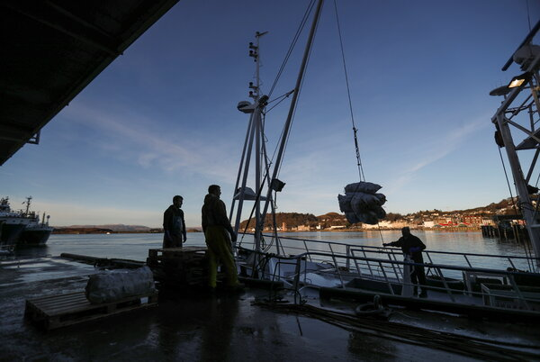 Unloading sacks of scallops from a fishing boat at Oban, Scotland, last week.