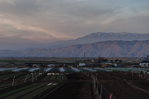 A farm in Riverside County, where immigrant workers harvest vegetables sold across the country.