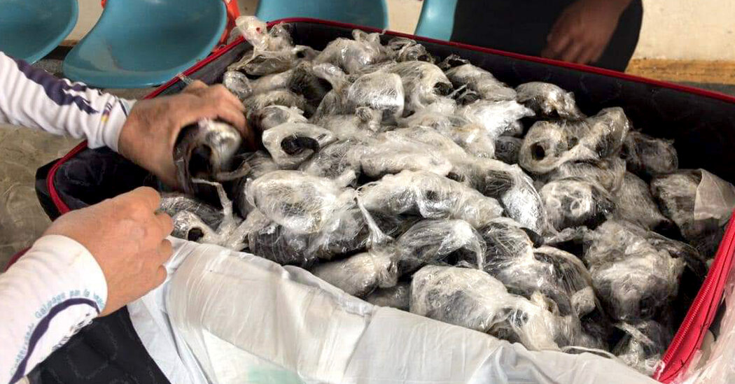 Nearly 200 Baby Tortoises Are Seized at Galápagos Airport