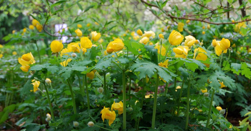 Look Fast: It's Spring Wildflower Season, Swahili Post