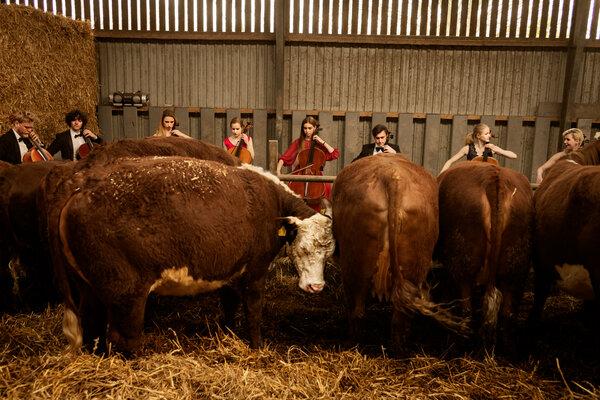 Los estudiantes de la Escuela Escandinava de Violonchelo, que vienen de todo el mundo para vivir en una antigua granja en Stevn, Dinamarca, tienen entre 17 y 25 años.