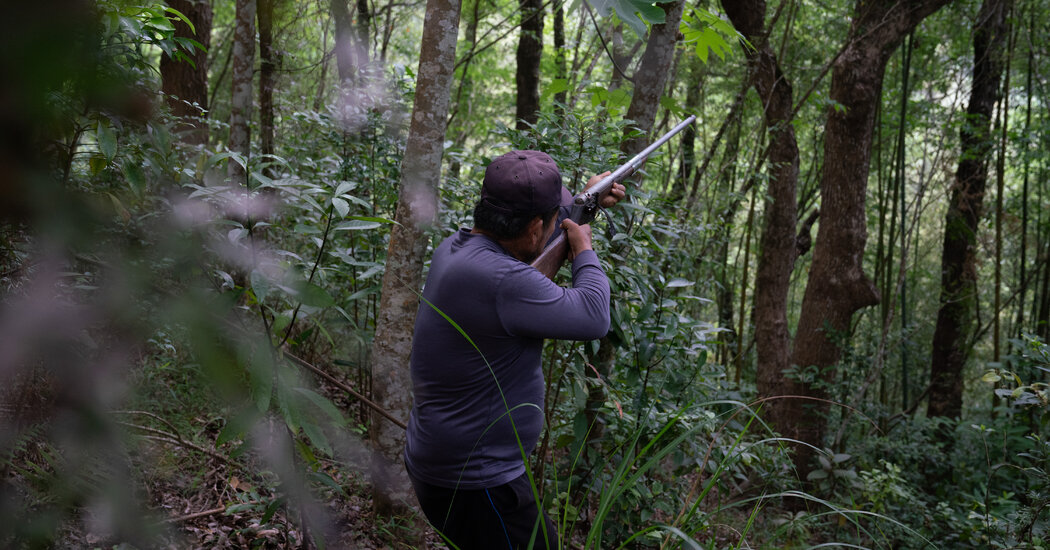 Taiwan Court Upholds Laws Restricting Hunting