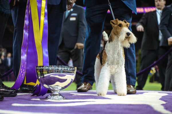 The 2019 Best in Show winner was a wire fox terrier named King.