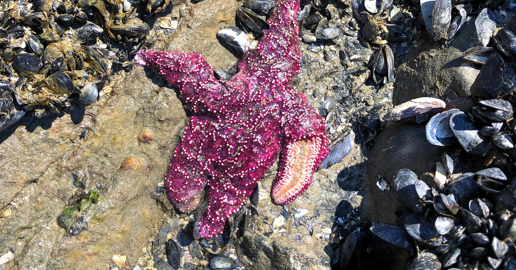 Heat Wave Killed Marine Wildlife en Masse