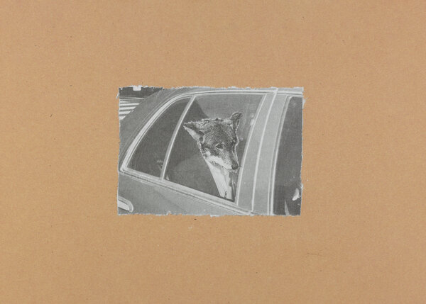 """""""Untitled,"""" 2016. A man with a coyote's head rides in the back of a car."""