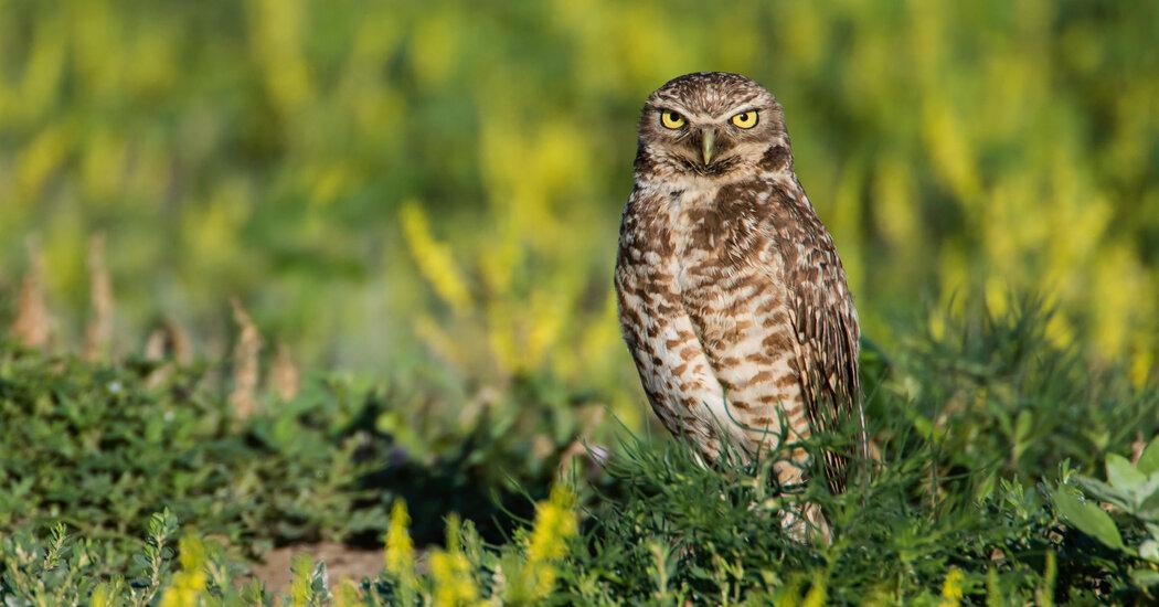 Biden administration reinstates bird protection, repeals Trump rule