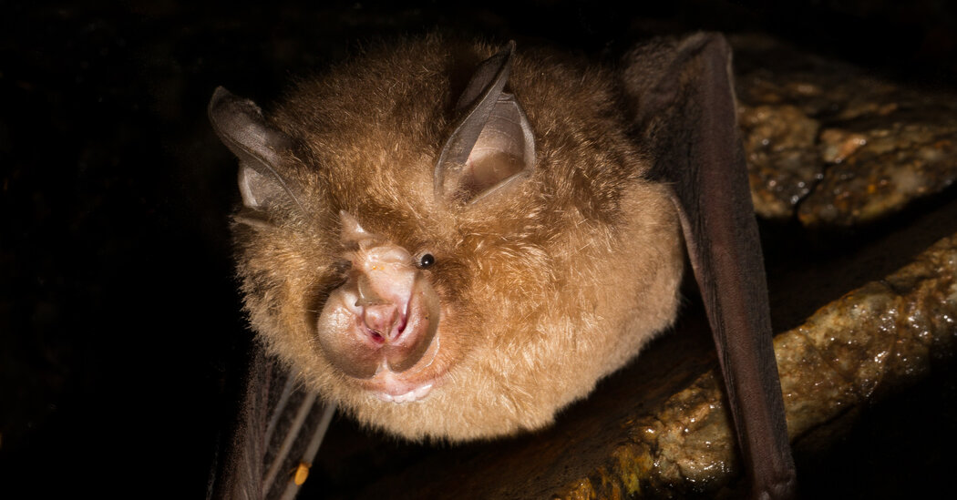 , Newly Discovered Bat Viruses Give Hints to Covid's Origins, The Evepost National News