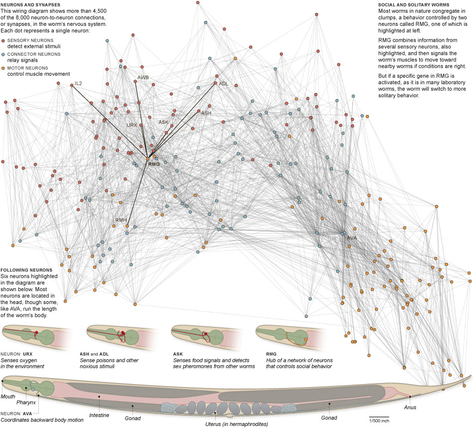 Diagram  Connectomics U2014how The Emerging Revolution In
