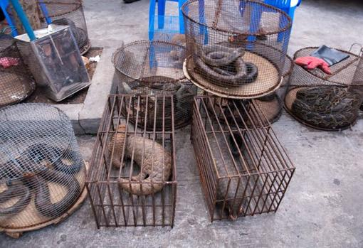 Several wild animals, including three Malaysian pangolins, one of them a female with her young, in a market in Myanmar.