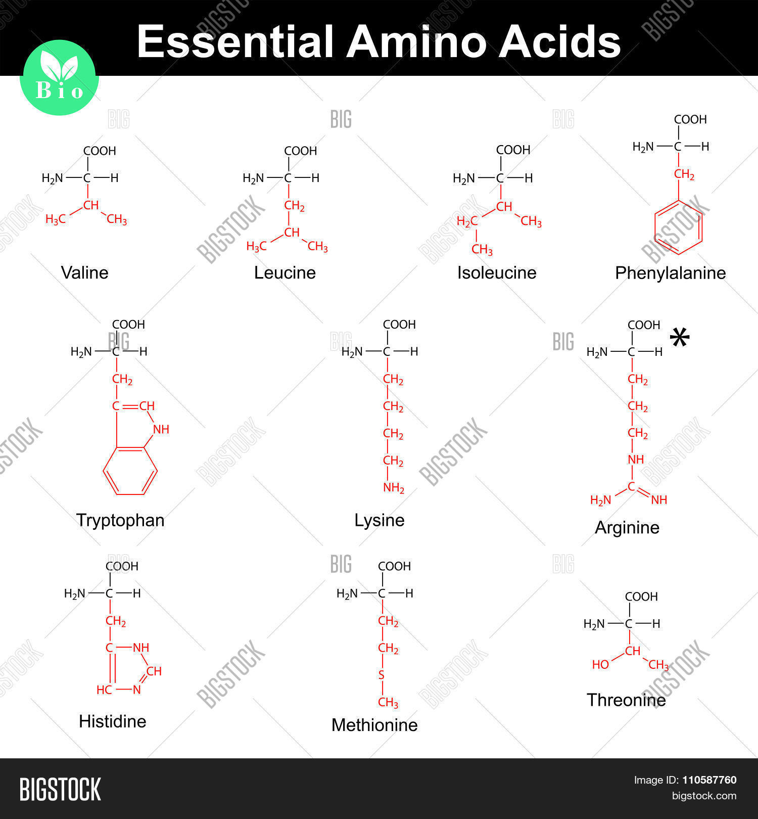 Essential Amino Acids Vector & Photo (Free Trial)   Bigstock