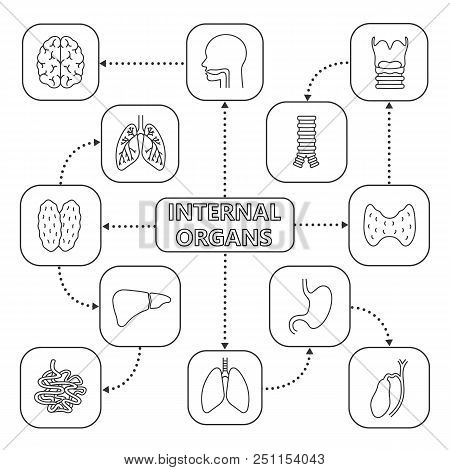 Endocrine System Images, Illustrations & Vectors (Free