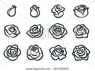 Black White Rose Vector & Photo Free Trial Bigstock