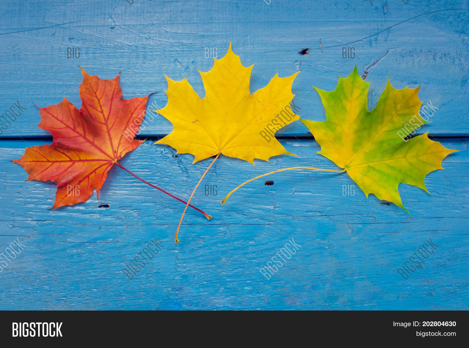 Autumn Leaf Life Cycle Image Amp Photo Free Trial