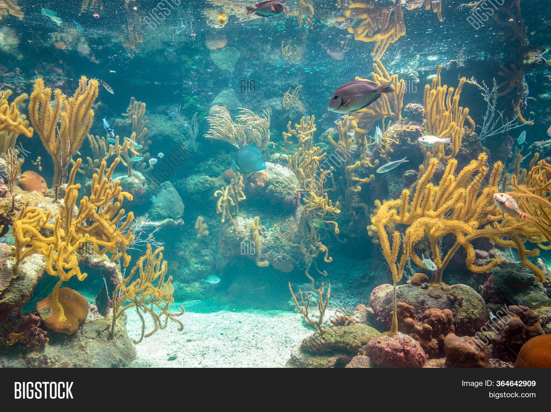 Coral Reef Inhabitants Image & Photo (Free Trial)   Bigstock