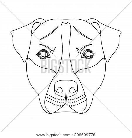 Big Dog Breeding Video