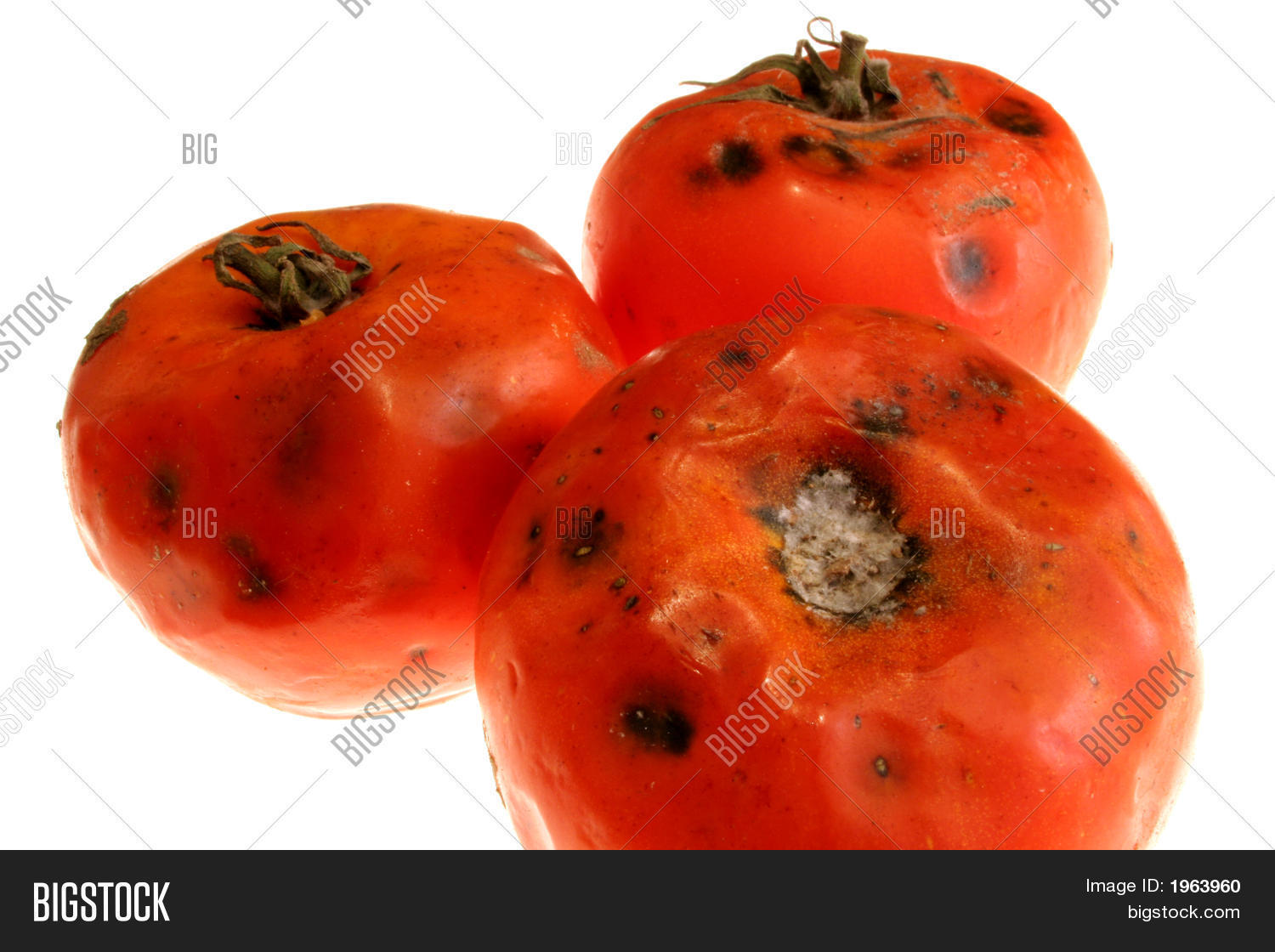 Rotten Tomatoes Image & Photo (Free Trial) | Bigstock