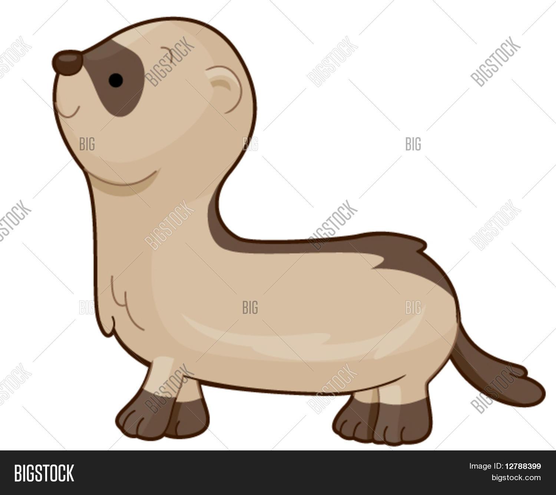 hight resolution of ferret vector