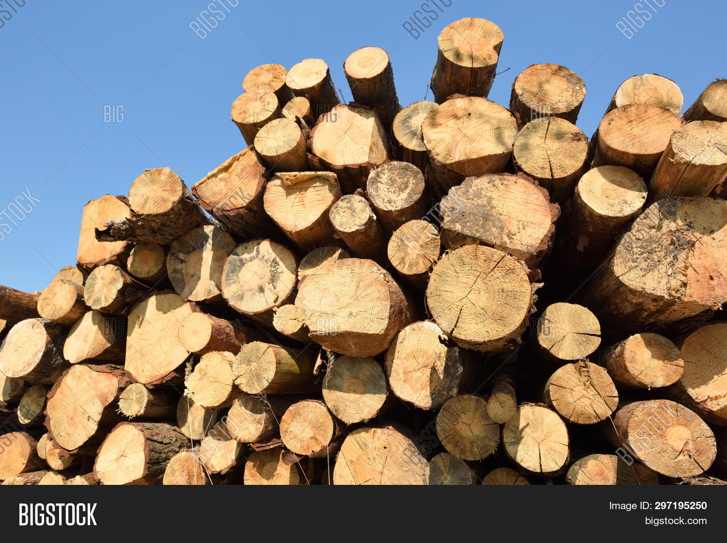 wooden logs timber image