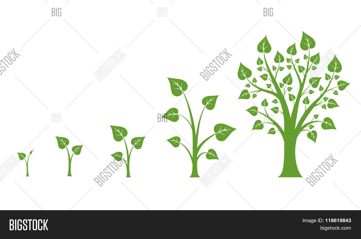 hight resolution of tree growth vector diagram