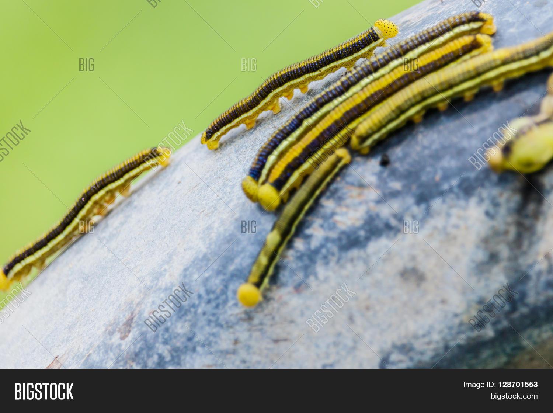 Worm Climb On Steel Image & Photo (Free Trial) | Bigstock