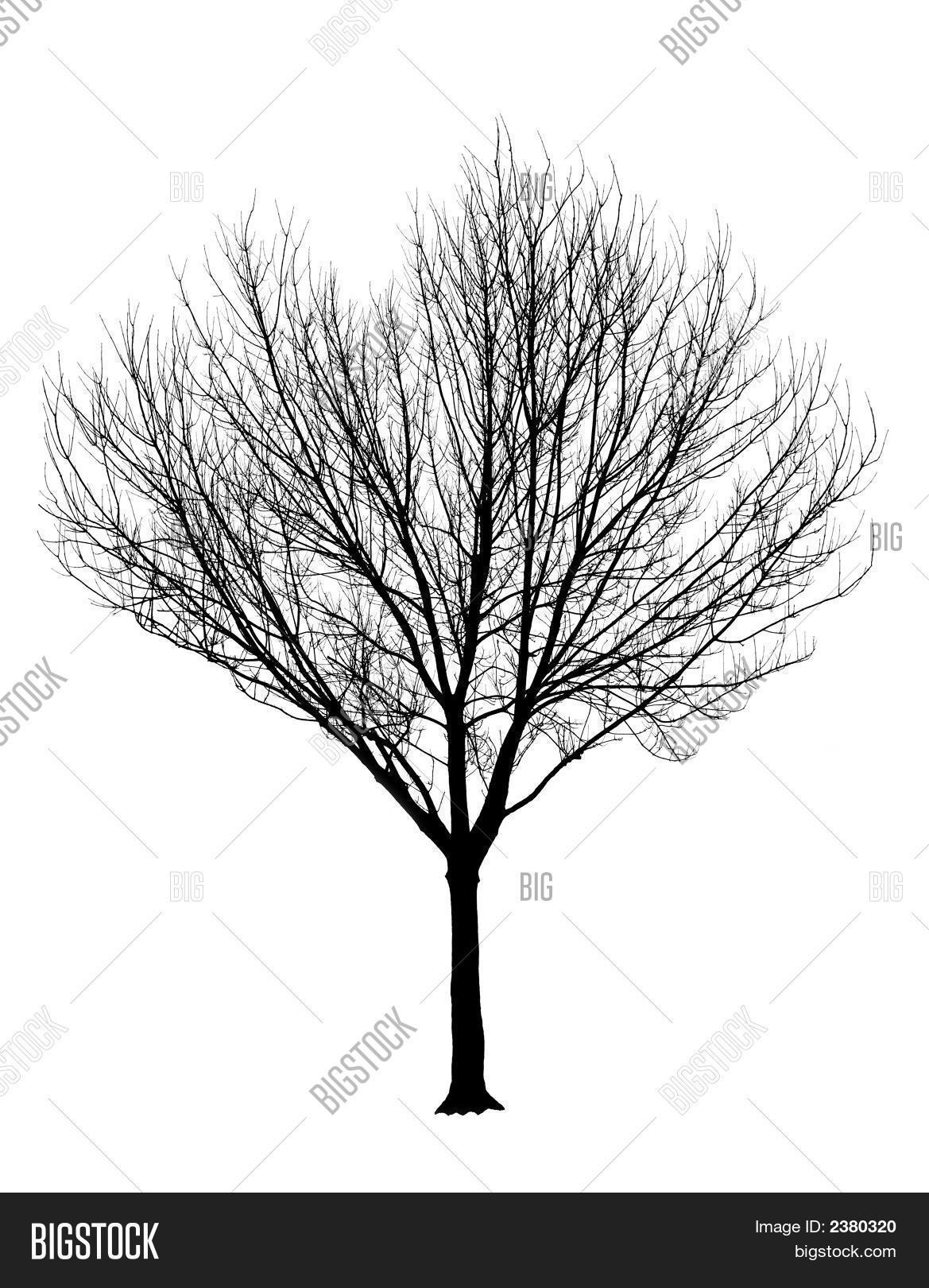Bare Tree Silhouette Image Amp Photo Free Trial