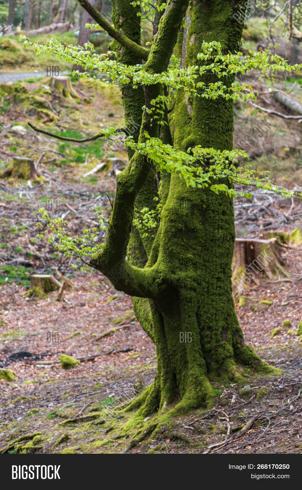 tree moss on roots