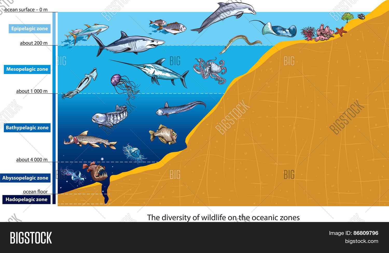 Ocean Zones Vector Amp Photo