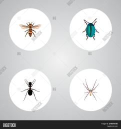 set of insect realistic symbols with housefly insect arachnid and other icons for your [ 1500 x 1620 Pixel ]