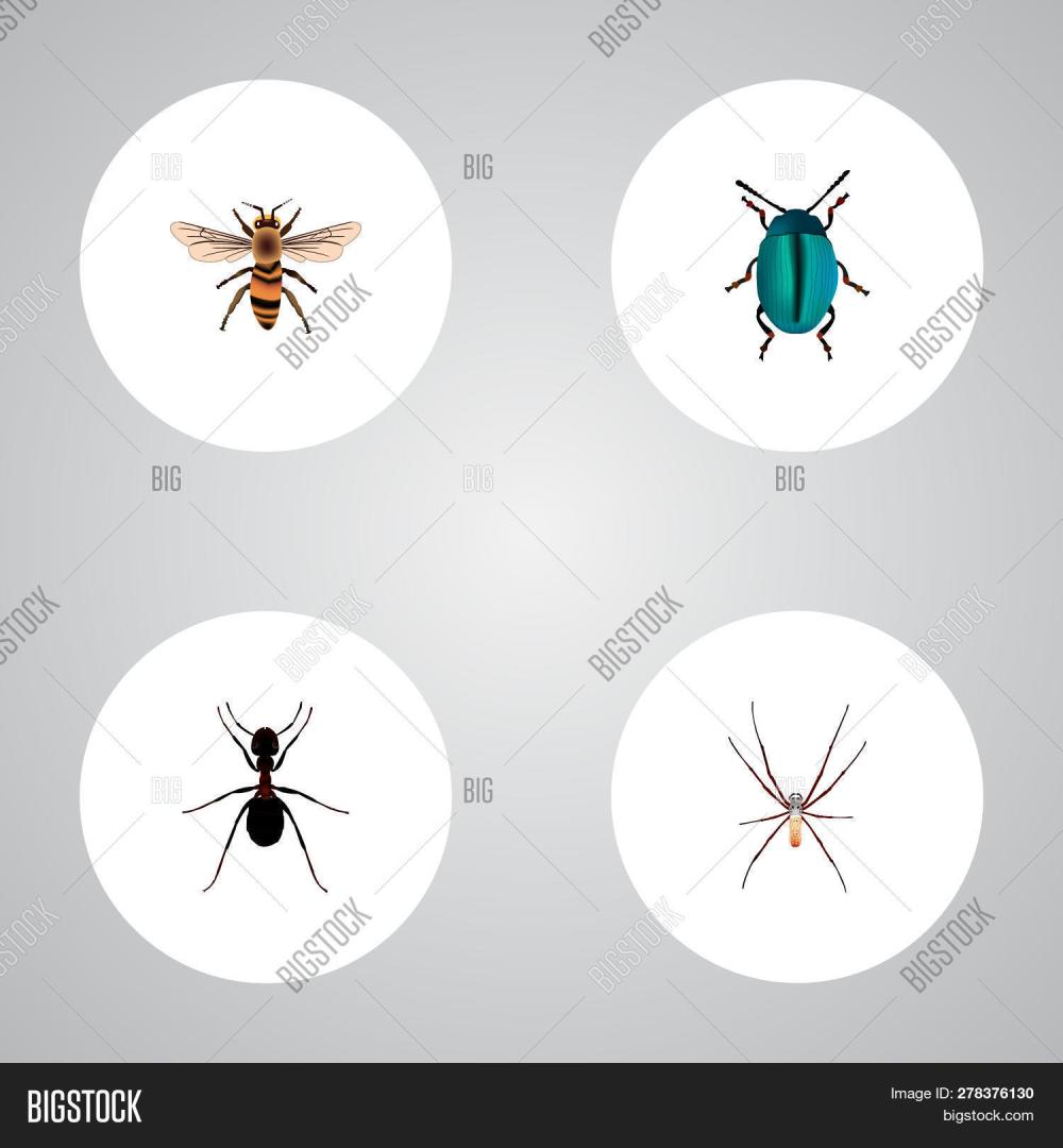 medium resolution of set of insect realistic symbols with housefly insect arachnid and other icons for your
