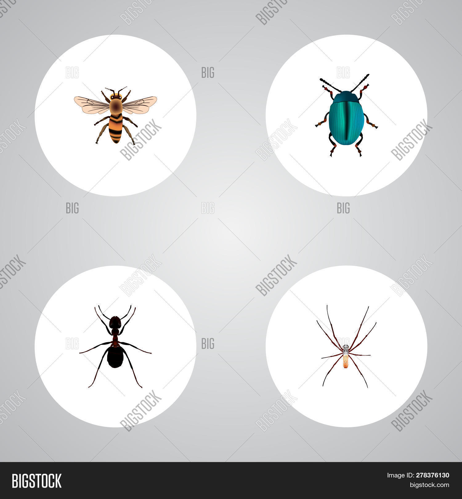 hight resolution of set of insect realistic symbols with housefly insect arachnid and other icons for your