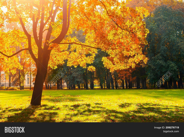 autumn landscape scene image