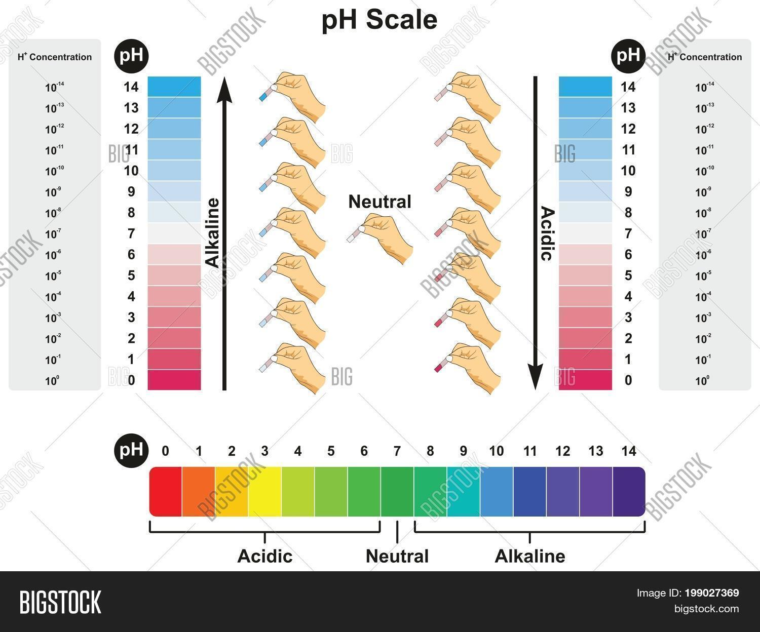 hight resolution of ph scale infographic diagram showing values and concentrations with experiment example result in acidic neutral or