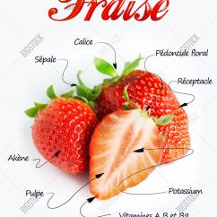 Strawberry Fruit Diagram 98 Honda Accord Speaker Wiring Parts Of A Plant Pictures To Pin On Pinterest