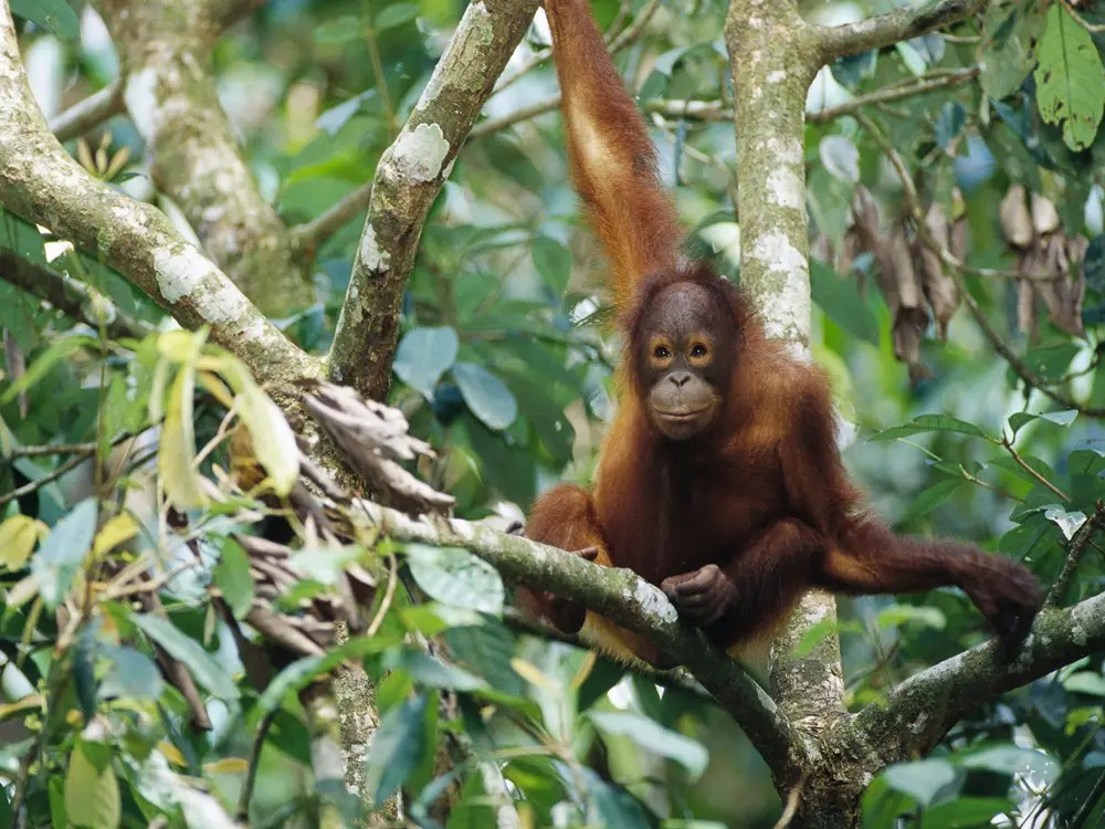 Go on an eco-tour in the jungles of Borneo.