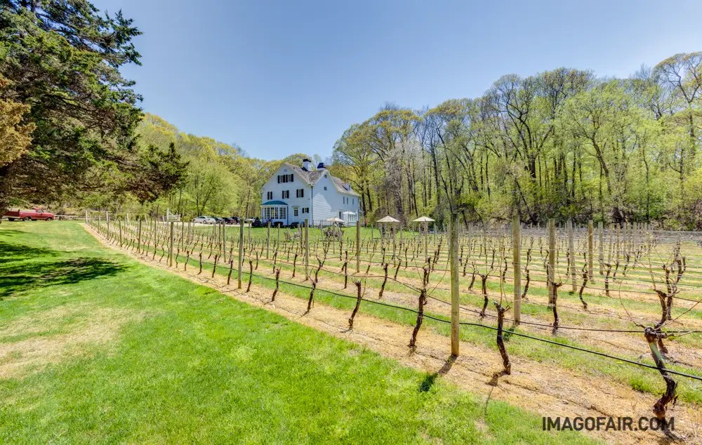 Seen here is one of two impeccably-maintained vineyards that grace the property. Together both vineyards produce over 750 cases of wine each year.